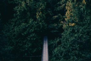 a foot bridge leading into a canopy of trees